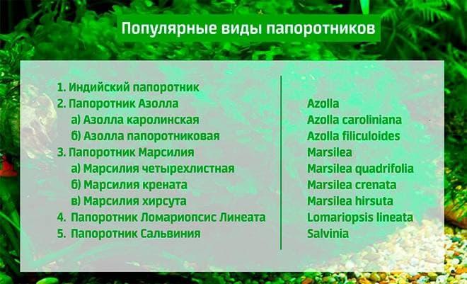 Популярные виды папоротников для аквариума