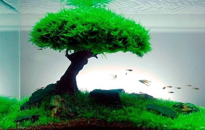 Бонсай в аквариуме