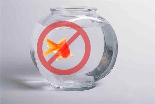 В круглом аквариуме нельзя содержать золотую рыбку