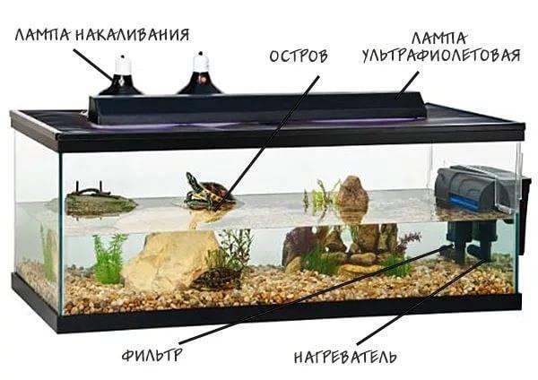 аквариум для черепахи