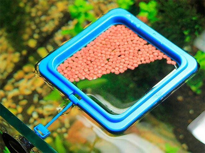 Кормушка для рыб на поверхности воды