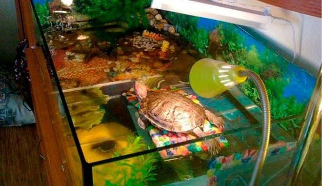обогрев берега черепахи
