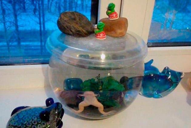 аквариум для лягушки