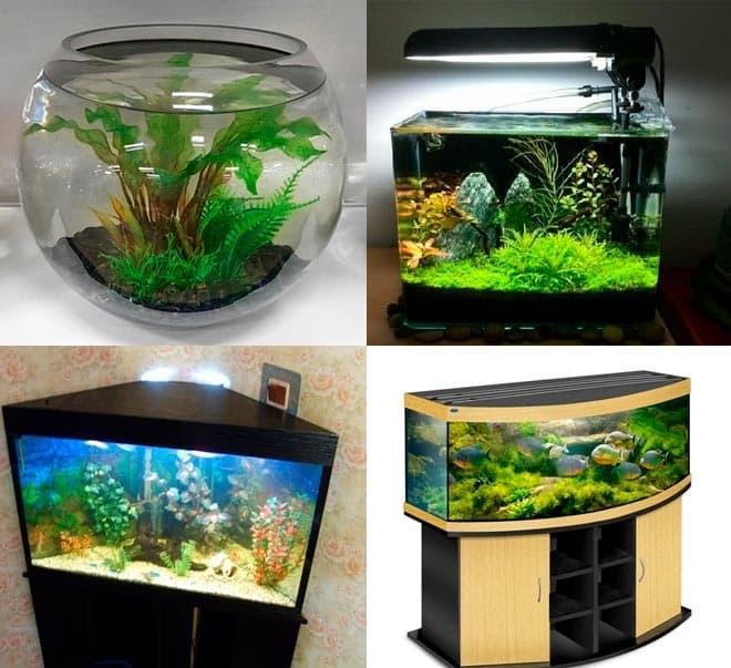 формы аквариума