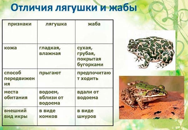 отличия жабы от лягушки