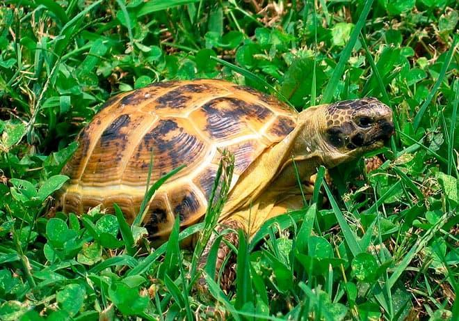 прогулки черепахи