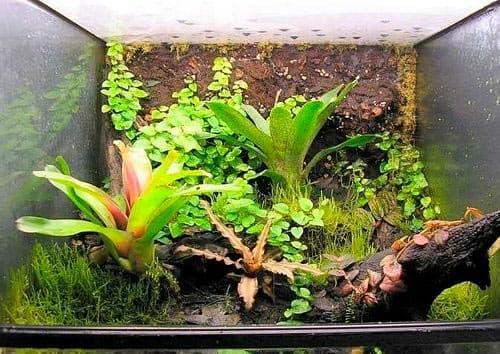 растения в террариуме
