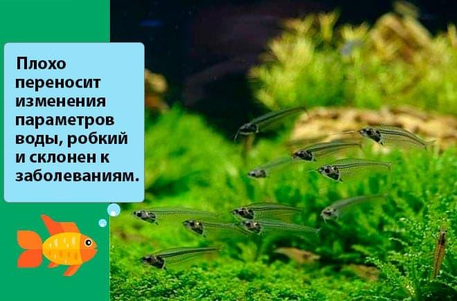 вода для рыбки