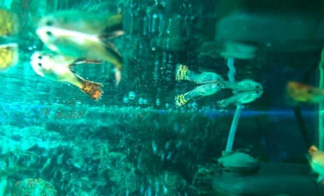 плавают на повехрности
