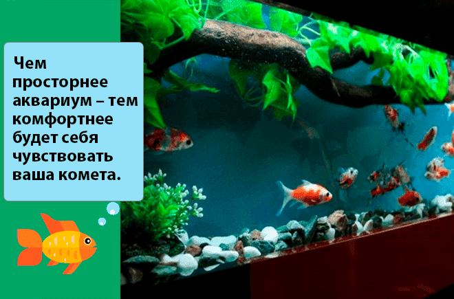 аквариум для рыбки кометы
