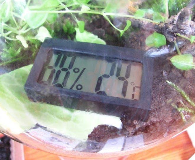 параметры влажности и температуре для Виноградных улиток в террариуме