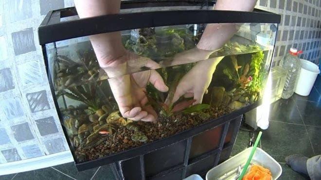 гурунт в аквариуме 20 литров