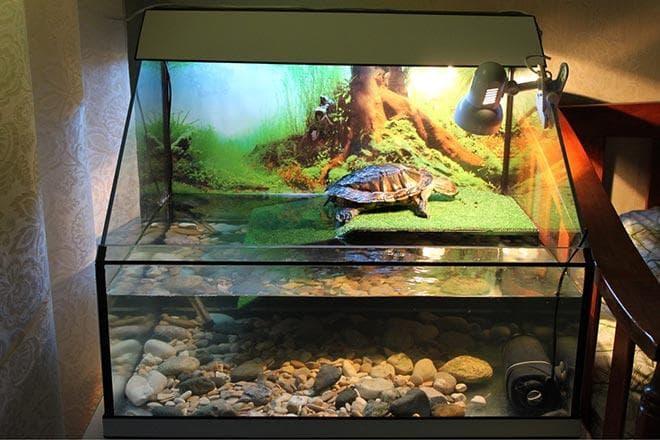 Красноухая черепаха и рыбки