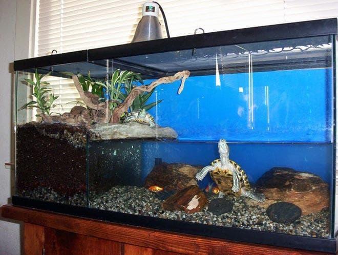 Высота аквариума для водной черепахи
