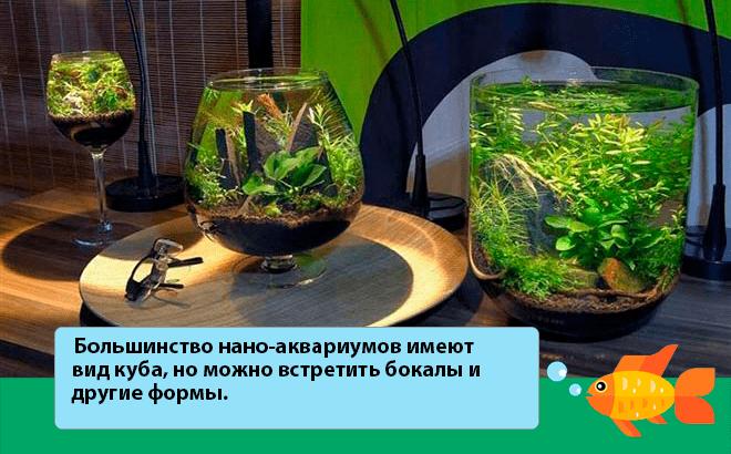 формы и виды нано аквариумов