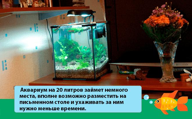содержание аквариума 20 литров