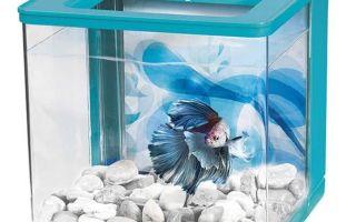 Почему рыбкам петушкам не подходят маленькие и круглые аквариумы