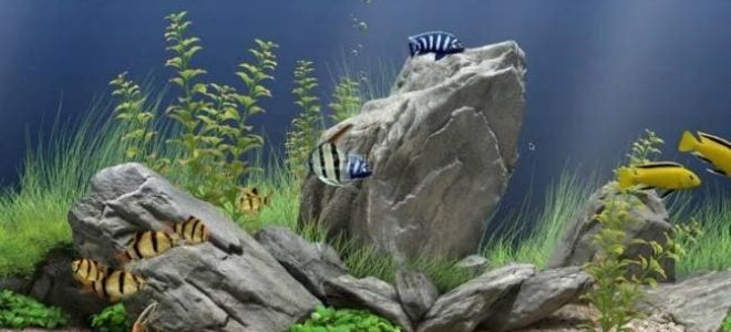 Советы по выбору камней для аквариума