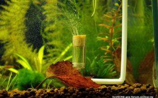 5 способов подачи СО2 (углекислого газа) в аквариум