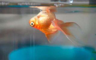 7 популярных причин умирания рыбок в аквариуме: что делать, профилактика