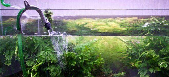 Меняем воду в аквариуме: 5 пошаговых действий для подмены