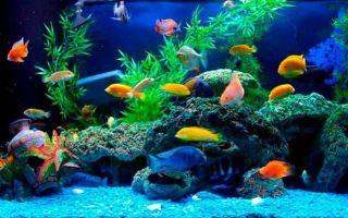 Начинающим аквариумистам про уход за аквариумом