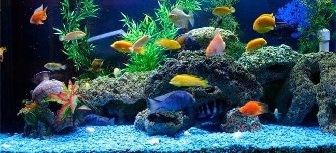 Выбираем лучший грунт для своего аквариума