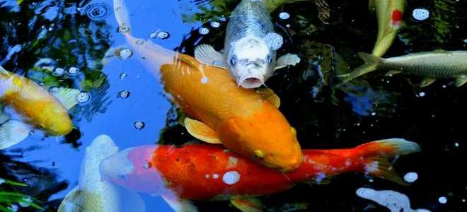 Таблица из 107 рыб и продолжительность их жизни