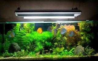 Разбираемся с подсветкой аквариума