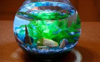 Почему круглый аквариум категорически не подходит золотой рыбке?