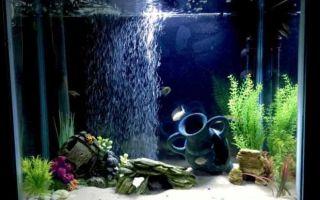 Пещера для рыбок — грот в аквариуме своими руками
