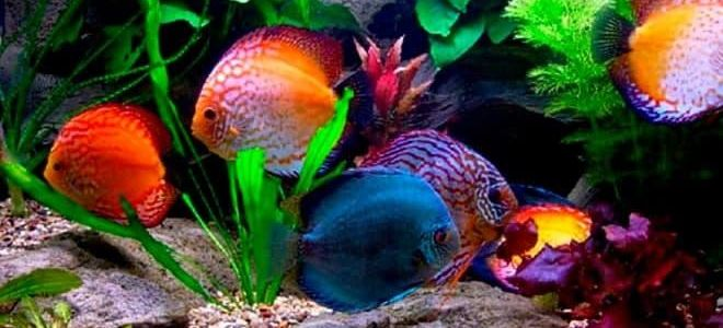Родины популярных аквариумных рыбок