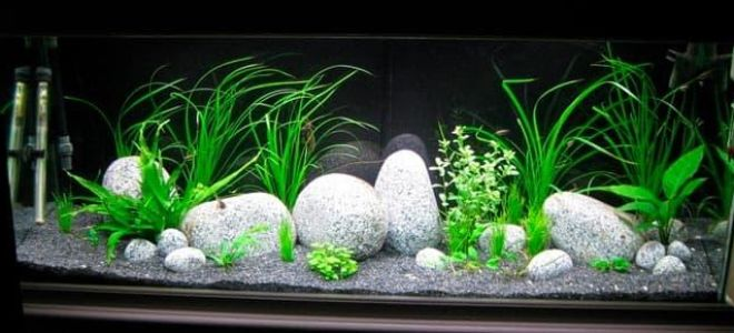 79 идей аквариумного дизайна