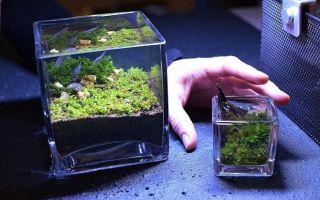 Всё для запуска нано аквариума