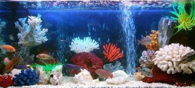 Выбираем аквариумный компрессор и 3 лучших аэратора для аквариума