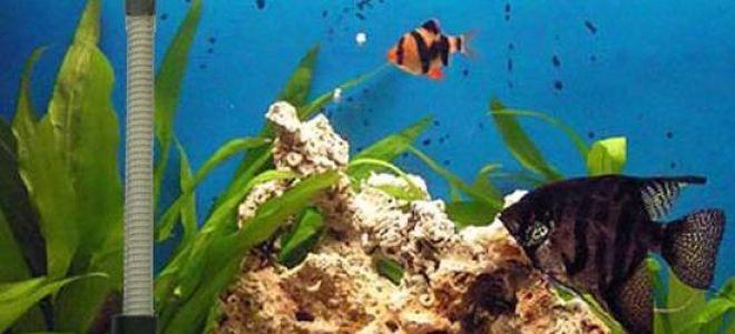 Секреты по поддержанию температуры с помощью аквариумных нагревателей