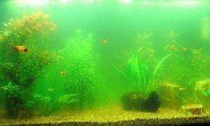 9 причин помутнения вода в аквариуме и что делать против этого