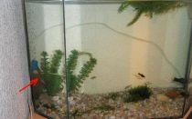 Пошаговая инструкция по заклейке аквариума при обнаружении течи