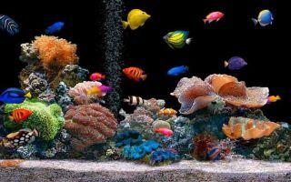 Краткая инструкция по уходу и содержанию за аквариумными рыбками