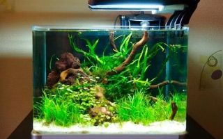Готовим аквариум на 30 литров: рыбки, растения, оформление, оборудование