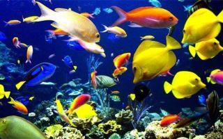 31 самых красивых аквариумных рыбок