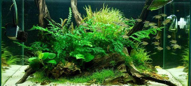 Рекомендации для подготовки коряги в аквариум: выбор, обработка, проблемы