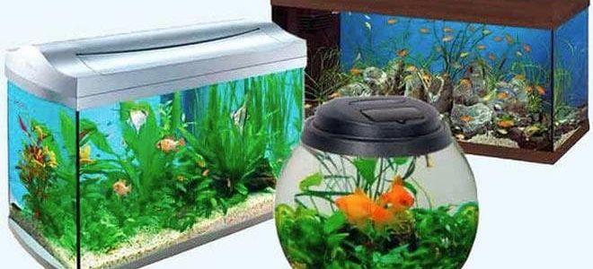 Запускаем аквариум на 20 литров: рыбки, грунт, растения, вода