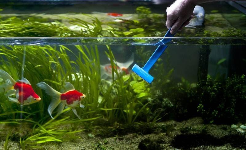 Мытьё стенок аквариума