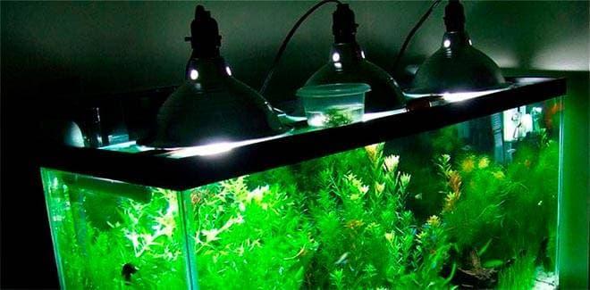 Металлогалогенной лампы