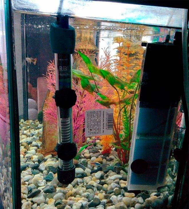 Установленный нагреватель в аквариуме