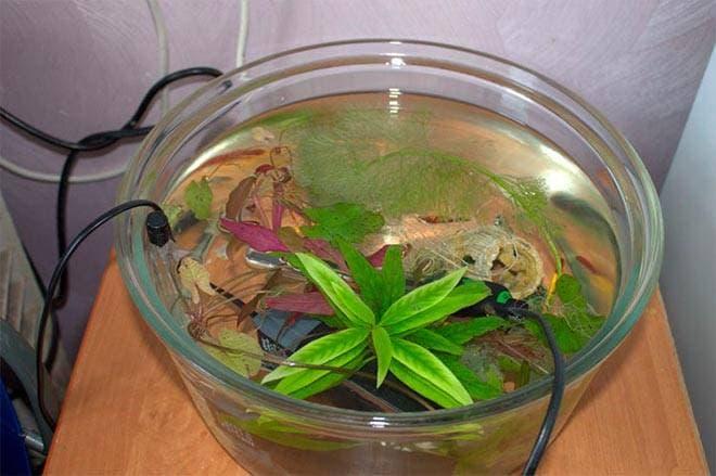 Рыбки в отдельной емкости