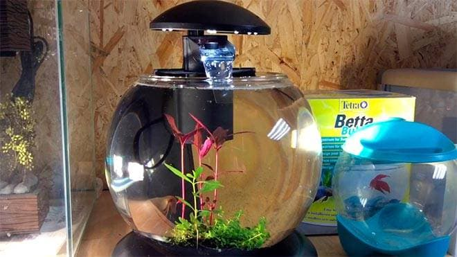 круглый аквариум tetra