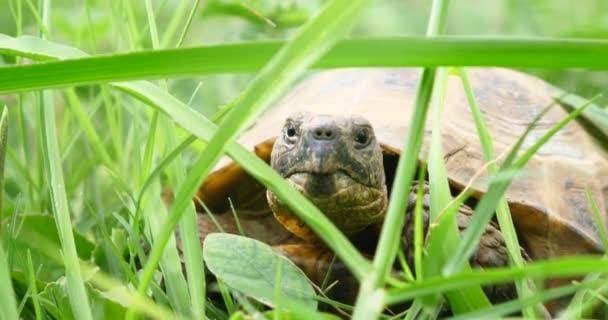 прогулка черепахи