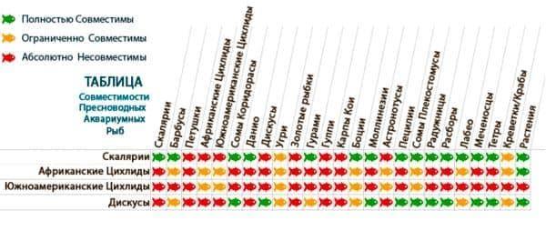 таблица совместимости цихлид
